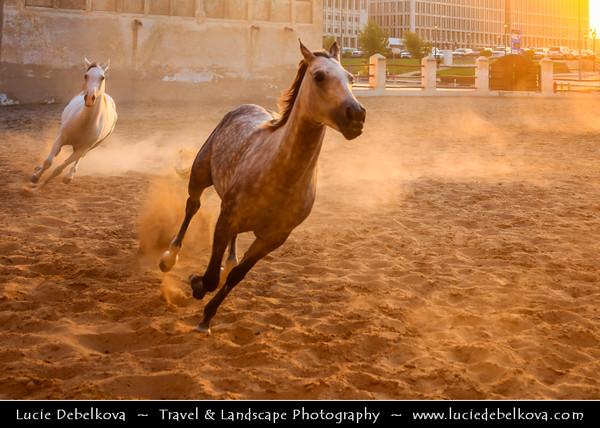Middle East - GCC - Qatar - Doha - الدوحة - ad-Dawḥa - ad-Dōḥa - Souq Waqif - Souk Wakif - Shopping destination built in traditional architectural Qatari style - Horses running at sunset