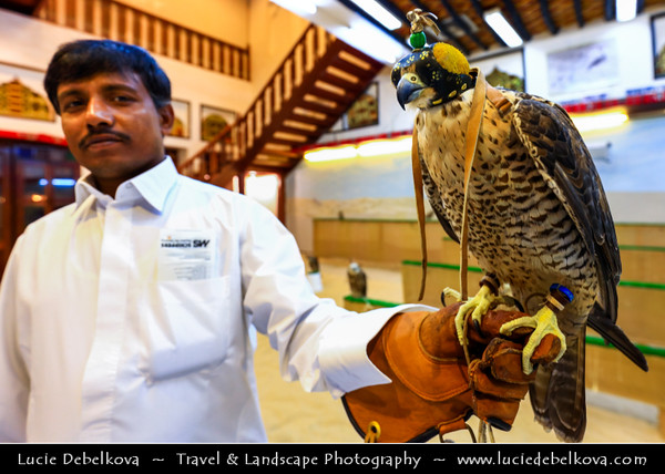 Middle East - GCC - Qatar - Doha - الدوحة‎ - ad-Dawḥa - ad-Dōḥa - Souq Waqif - Souk Wakif - Shopping destination built in traditional architectural Qatari style - Falcon market