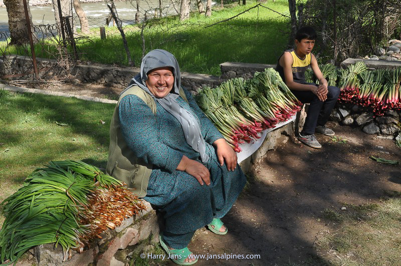 selling wild rhubarb
