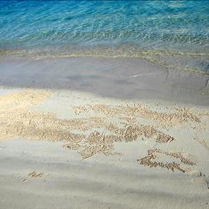 Shore strewn with sand bubbler crab pellets