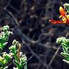 Caterpillar and Wasp