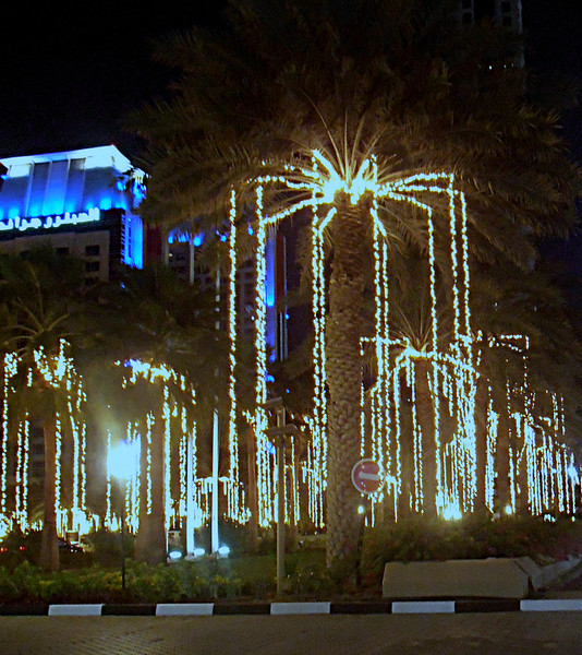 Illuminated Date Palms