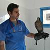 Veterinarian with Saker Falcon