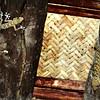 Fan-toed Geckoes