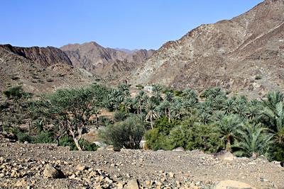 Wadi Hayl Oasis