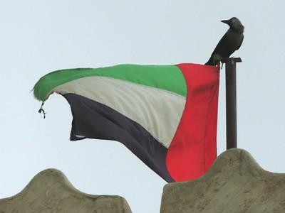 Crow on UAE Flag