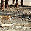 Ibex and Gazelle