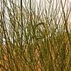 Message on a Broom Bush