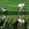 Assorted Wading Birds