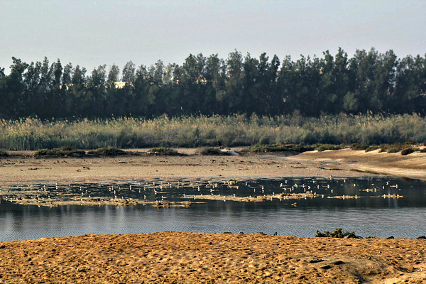 Wasit Lake with Plovers