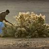 Harvesting Rimth