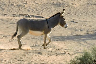 Donkey on the move