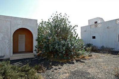 Courtyard with Milkweed