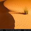 Middle East - GCC - United Arab Emirates - UAE - Abu Dhabi Emirate - Empty Quarter Desert - Rub Al Khali - Arabian Desert - Spectacular sea of sand dunes and a lonely grass