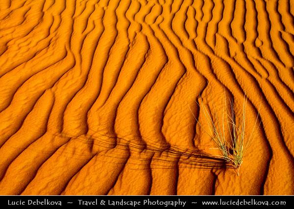 Middle East - GCC - United Arab Emirates - UAE - Dubai Emirate - Desert Safari in Sea of Sand Dunes