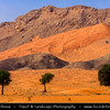 Middle East - GCC - United Arab Emirates - UAE - Emirate of Sharjah - Sea of sand dunes in vast desert landscape with trees surrounded by mountains