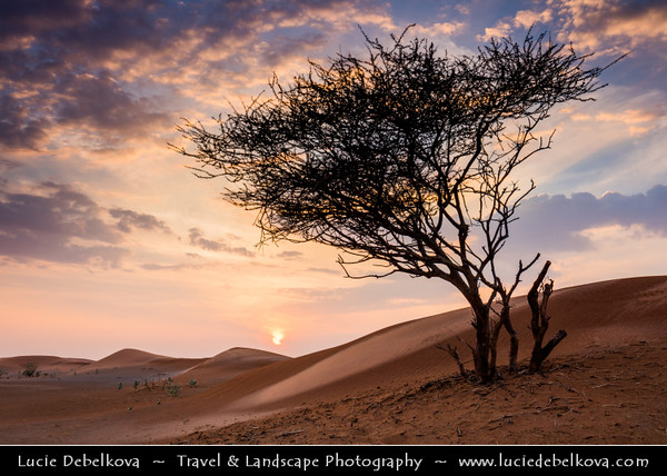 Middle East - GCC - United Arab Emirates - UAE - Emirate of Ras Al Khaimah - RAK - Sea of sand dunes in vast desert landscape with lonely trees during dramatic sunset