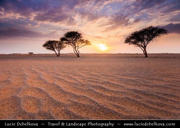 Middle East - GCC - United Arab Emirates - UAE - Emirate of Ras Al Khaimah - RAK - Sea of sand dunes in vast desert landscape with lonely trees during dramatic sunset