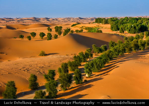 Middle East - GCC - United Arab Emirates - UAE - Emirate of Abu Dhabi - Al Ain desert area with endless sea of sand dunes - Oases with lonely trees