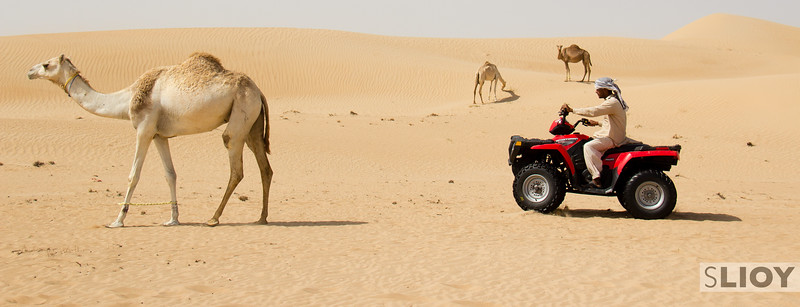 Racing or Ranching? Deserts of Dubai.