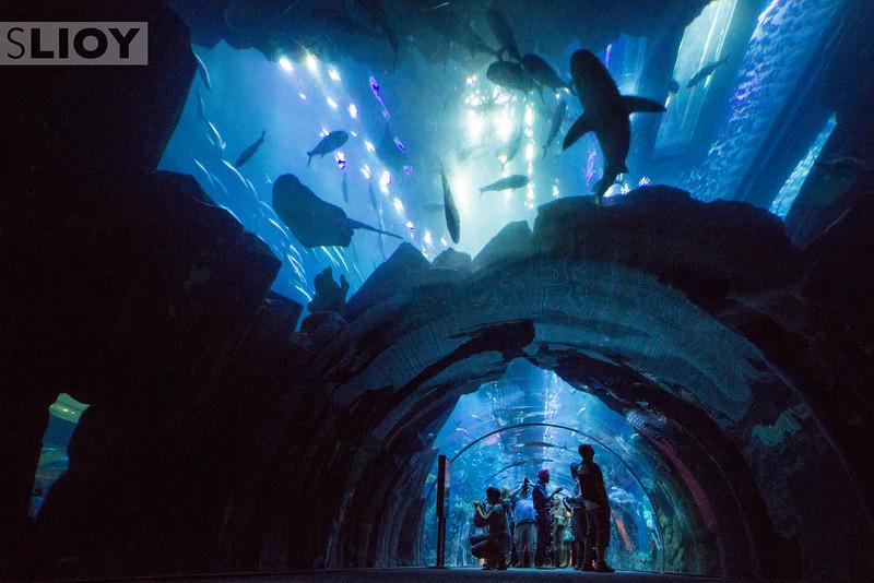 A Feeling of Foreboding in the Dubai Aquarium.