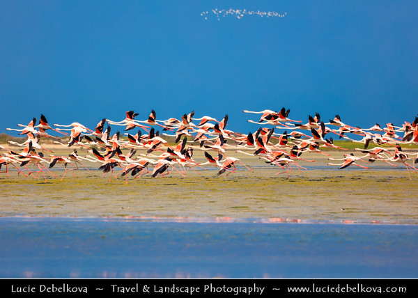 Middle East - GCC - United Arab Emirates - UAE - Emirate of Ras Al Khaimah - RAK - Bay with shallow waters and sand islands ideal for Flamingos to wonder around