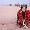 Camel in the desert of Dubai.
