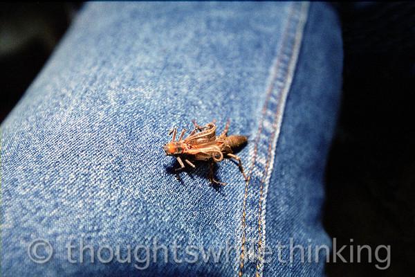015 MF2005 Day1 June 19 hatching stonefly
