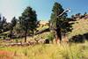 034 MF2005 Day2 June 20 near 2nd campsite