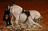 Medieval Times - Kissimmee Florida (16)