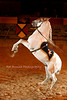 Medieval Times - Kissimmee Florida (14)