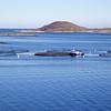 Viking Sea: Near Torstad: Salmon farm zoom