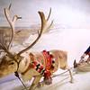 Tromsø University Museum: Reindeer sleigh