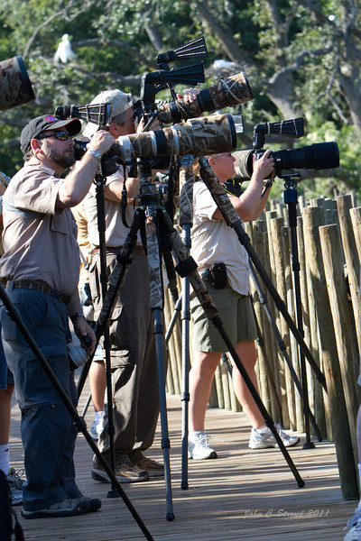 The rookery attracted as many photographers as birds - see more on next page............