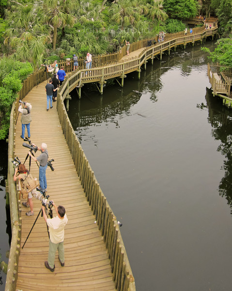 Aerial view of rookery's boardwalk from pole camera