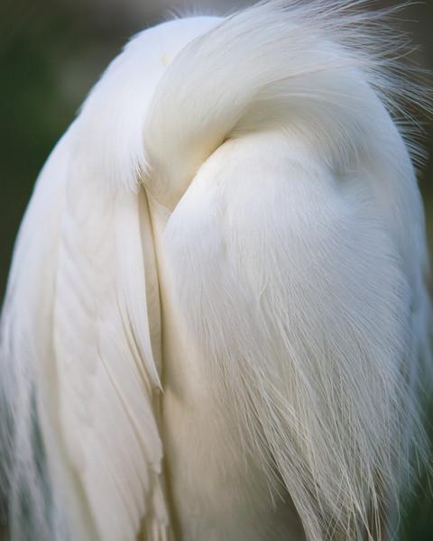 Same bird - Shy pose.