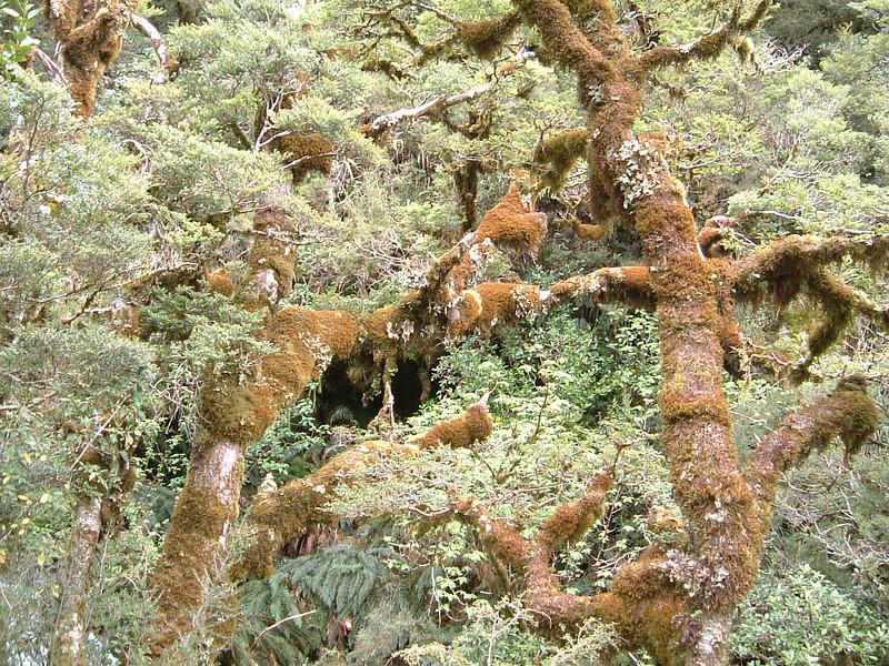 Rain  makes moss green forest!