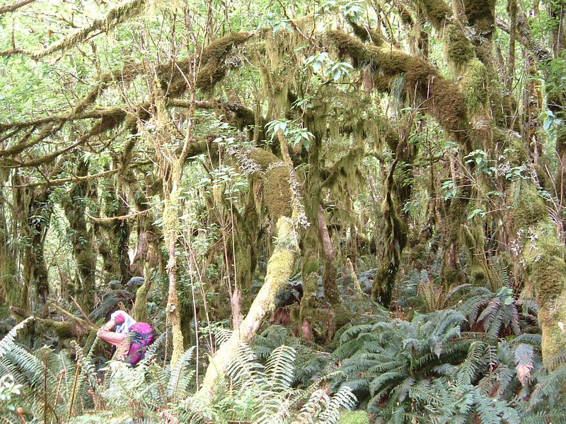 Tomoko hikes through moss forest.