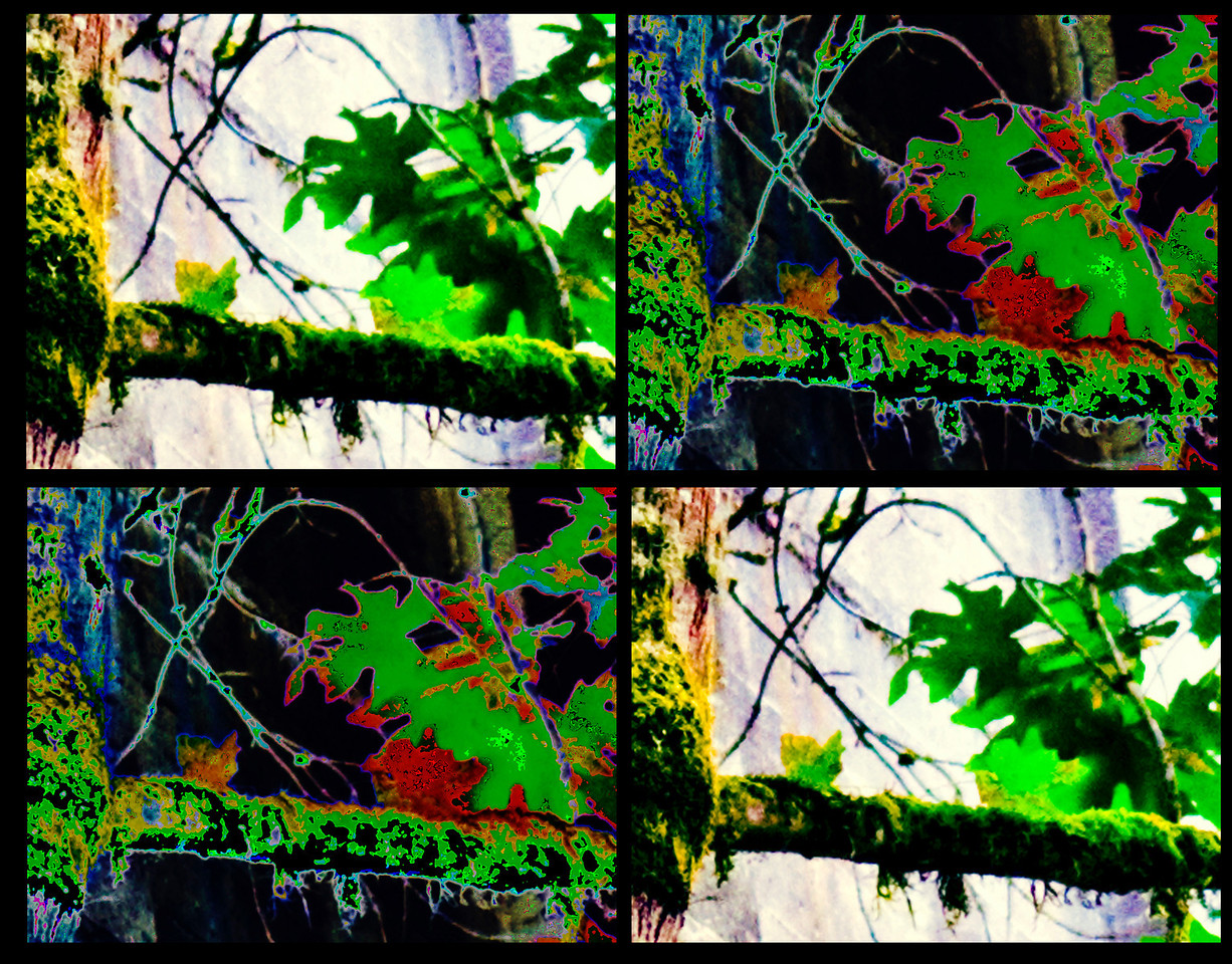 ARTIST'S STATEMENT    Photoshop has unlocked fresh methods for viewing the physical world.  Among other features, it enables the uncovering of myriad vistas of a single picture.  The potential is exciting and exhilarating.  I have been doing work in which this resource of the medium is exposed and illustrated. bring attention to the toolwork itself.