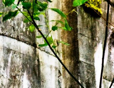 Mill Pond 2007 (56)2