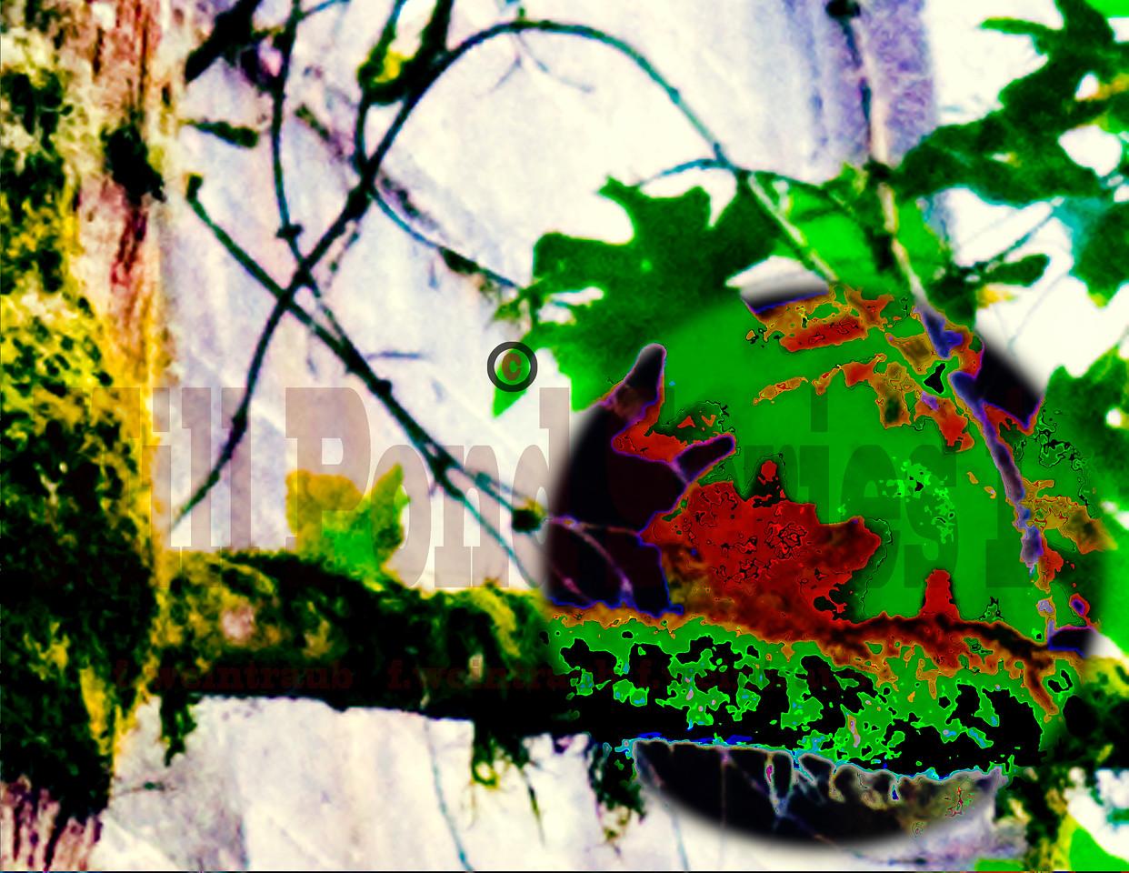 Mill Pond 2007 (70)-2 copy 2