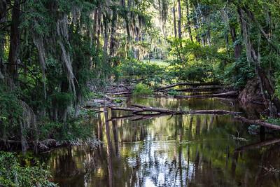 Phinizy Swamp Nature Park in Augusta, Georgia