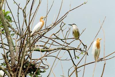 sk_baras-bird-sanctuary