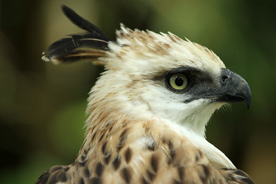 philippine-eagle-center
