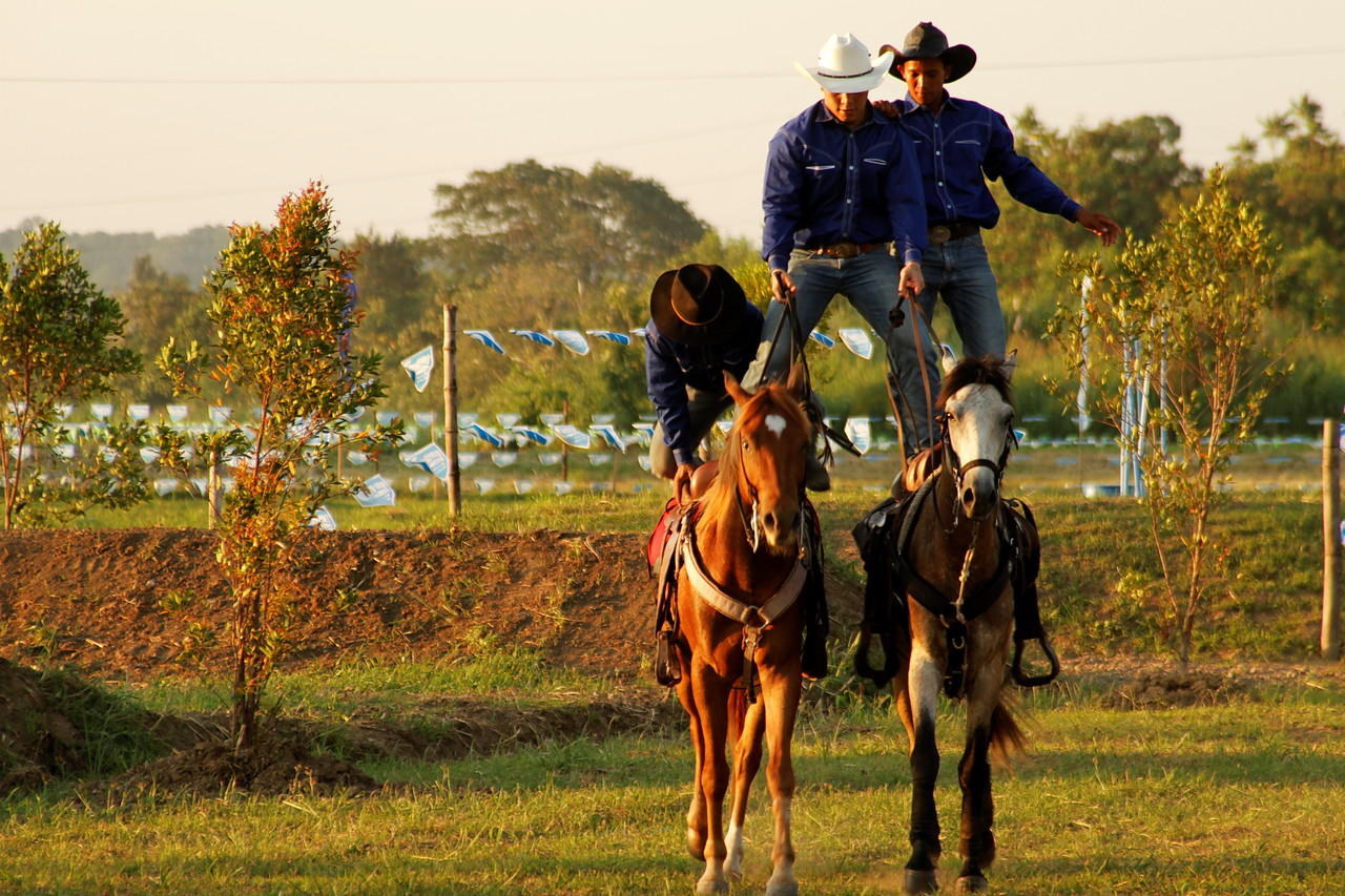 davao-horse-show