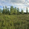 Panoramic view of a meadow on the farm near the Creek.