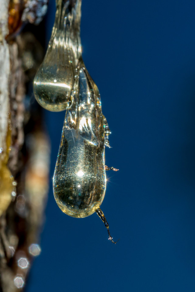 An insect encased in a drop of resin, only the legs are sticking out