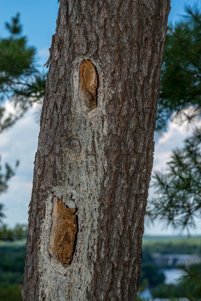 Wood pecker holes, Summit Rock Trail