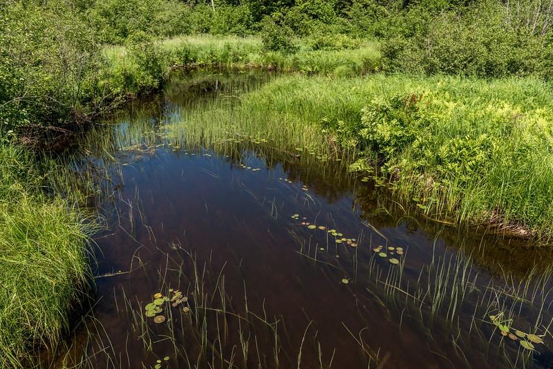 Big Carp River wetlands, North Mirror Lake Trail. Porcupine Mountains, Michigan.