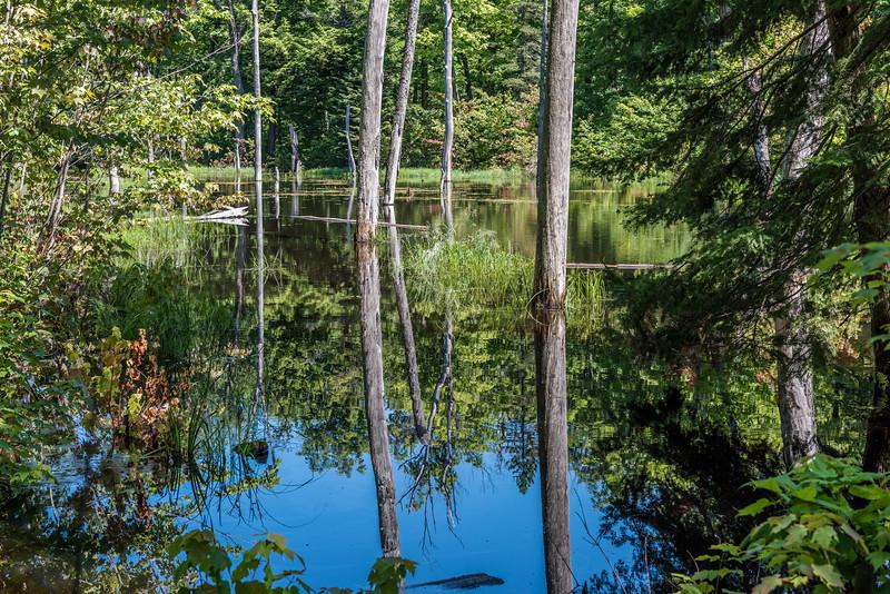 Wetland near Mirror Lake. Porcupine Mountains, Michigan.